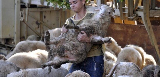 FederFauna for sheep-meat supply chain and immigrant workers